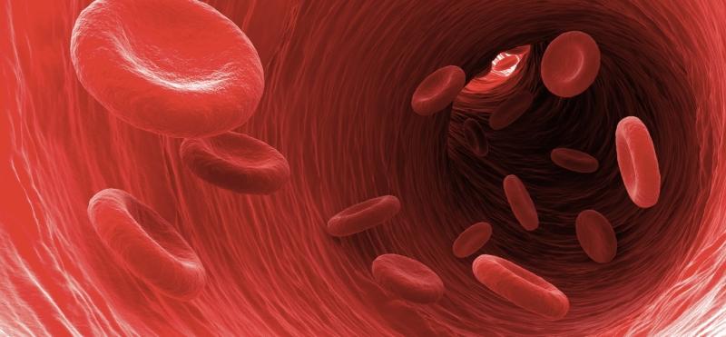 Analiza żywej kropli krwi - jaką funkcję pełni krew